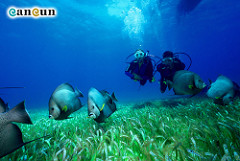 Buceo-dMap Travel Guide